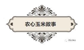 """""""农心玉米故事"""" 专为玉米增产而来!"""